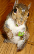 squirrel_zoe_spinach_twist